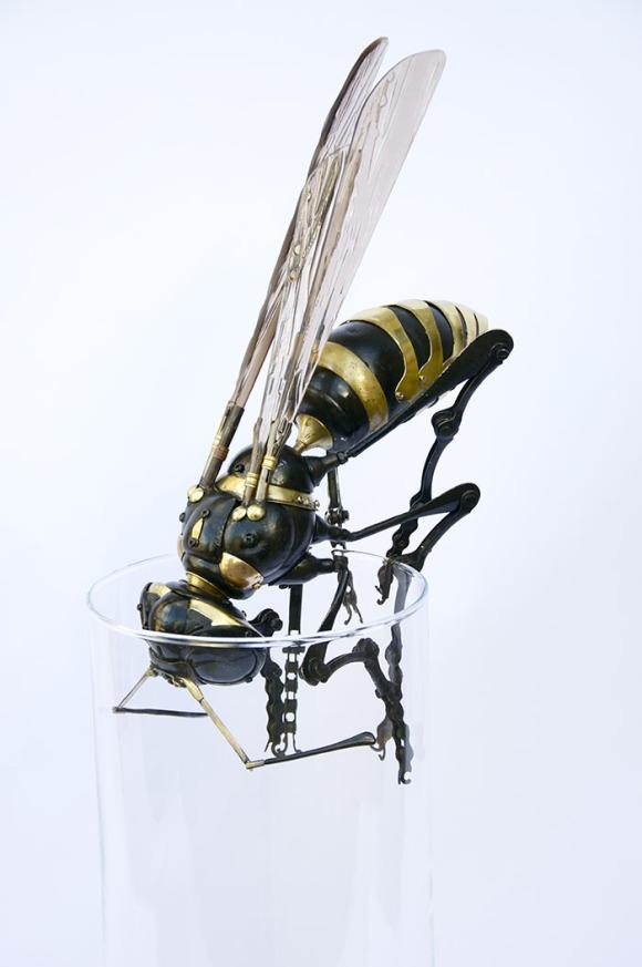 wasp[1]