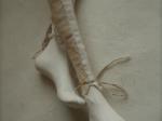 Ella (detail)