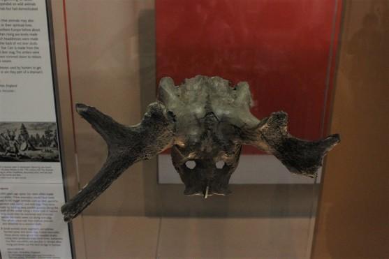 fhr-antlers-2